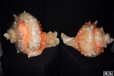 Hand-carved conch shells in onyx